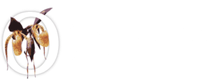 Orchidhouse Asia